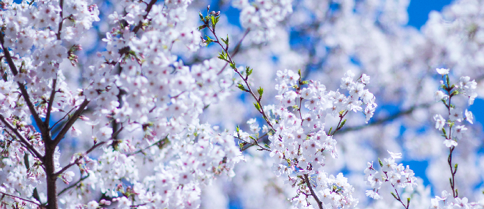 Spring Rune sale